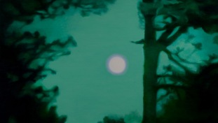 green-night-forest-and-the-moon-2015_1958-1